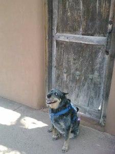 Bear in front of rustic door